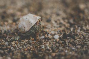 Hermit crab essays